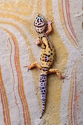 Leopard Gecko Poster by Robert Jensen