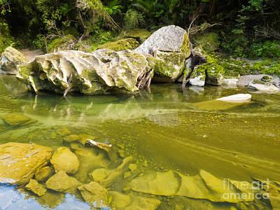 Lush Green Rainforest Along Pororai River Nz Poster