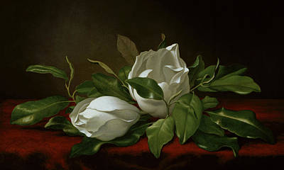 Magnolia Poster by Martin Johnson Heade