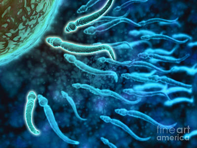 Microscopic View Of Sperm Swimming Poster by Stocktrek Images