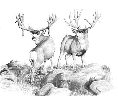 2 Muley Bucks Poster