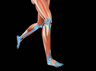 Muscular System Of Jogger Poster