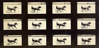 Muybridge Motion Study, 1870s Poster
