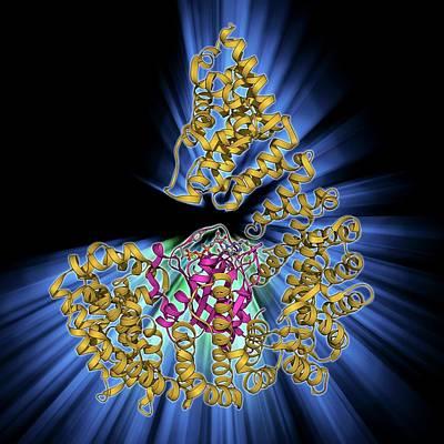 Nuclear Import Complex Molecule Poster by Laguna Design