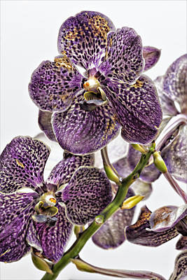 Orchid Study Poster