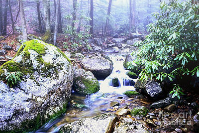 Otter Creek Wilderness Poster by Thomas R Fletcher