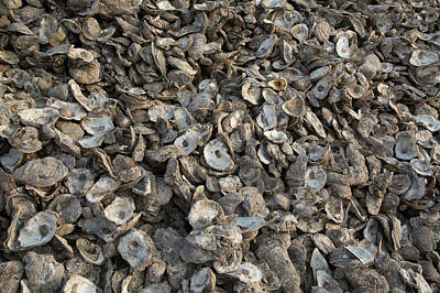 Oyster Shells After Processing Poster by Jim West