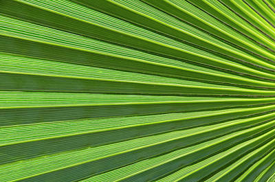 Palm Leaf Abstract Poster by Nigel Downer