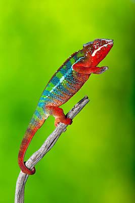Panther Chameleon Poster by Robert Jensen