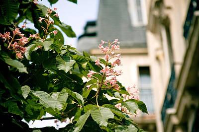 Paris The City Of Blossoming Chestnut Trees  Poster by Raimond Klavins