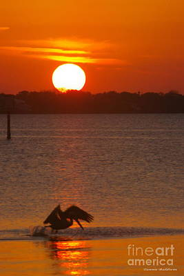 Poster featuring the photograph Pelican Sunset by Tannis  Baldwin