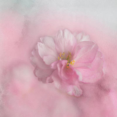 Poster featuring the photograph Pink Blossom by Annie Snel