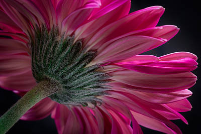 Pink Flower Poster by Edgar Laureano