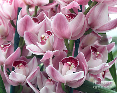 Pink Orchids Poster by Debbie Hart