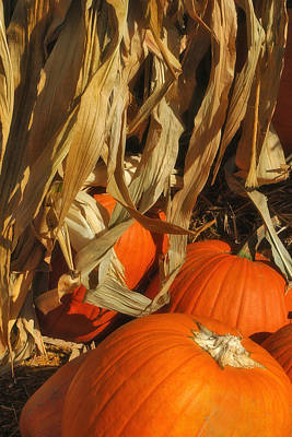 Pumpkin Harvest Poster by Joann Vitali