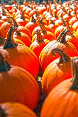 Pumpkins On Pumpkin Patch Poster