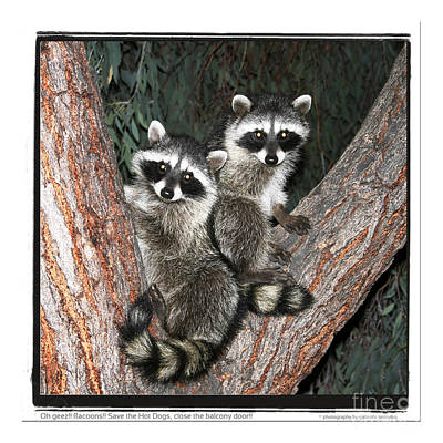 Racoons  Poster