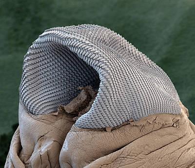 Radula Of A Slug, Sem Poster