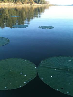 Rayburn Lilly Pads Poster