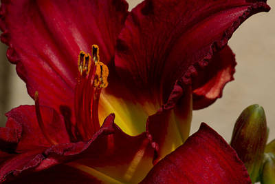 Poster featuring the photograph Red Lily by Ivete Basso Photography
