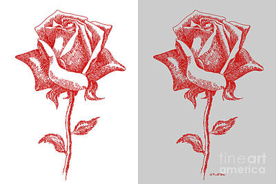 2 Red Roses Poster Poster