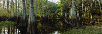 Reflection Of Trees In Water Poster by Panoramic Images