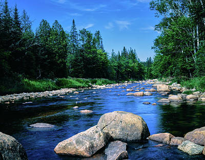 River Flowing Through A Forest, Ausable Poster
