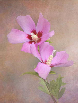 Rose Of Sharon Poster by Angie Vogel