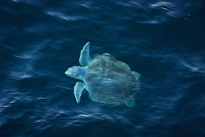 Poster featuring the photograph Sea Turtle by Tammy Schneider