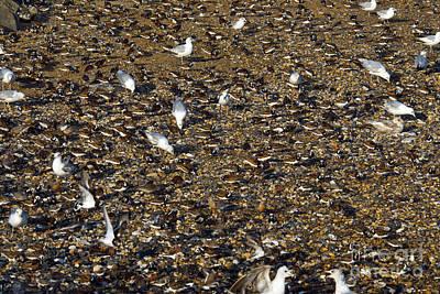 Shorebirds Poster by Mark Newman