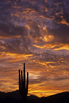 Silhouetted Saguaro Cactus Sunset At Dusk With Dramatic Clouds Poster