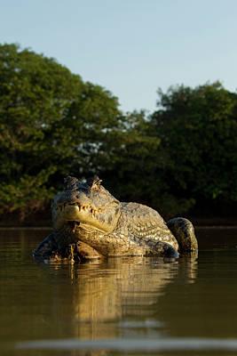 South America, Brazil, Pantanal, Moto Poster