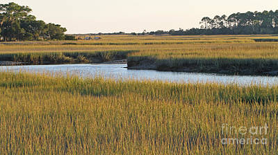South Carolina Salt Marsh Poster