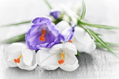 Spring Crocus Flowers Poster
