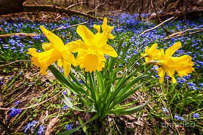 Spring Wildflowers Poster by Elena Elisseeva