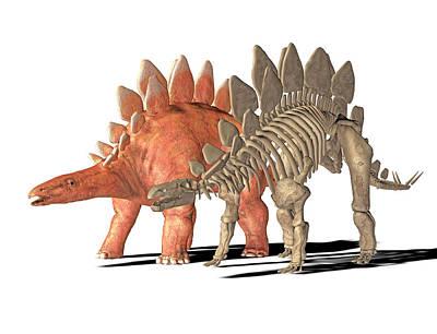 Stegosaurus Dinosaur Poster