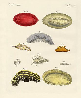 Strange Molluscs Poster by Splendid Art Prints