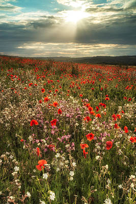 Stunning Poppy Field Landscape In Summer Sunset Light Poster by Matthew Gibson