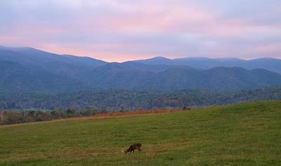 Sunrise In Cades Cove Poster by Dan Sproul