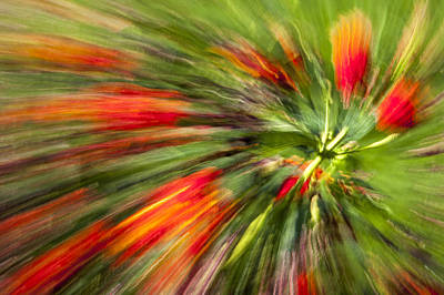 Swirl Of Red Poster by Jon Glaser
