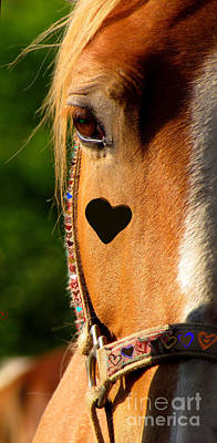 Poster featuring the photograph The Love Of A Horse by France Laliberte