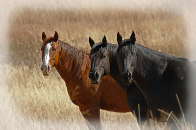 Three Horses Poster by Ernie Echols