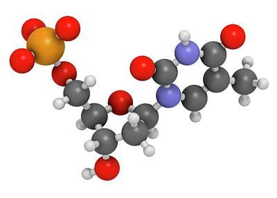 Thymidine Monophosphate Molecule Poster