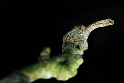 Tree Stump Orb-weaver Spider Poster