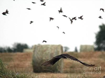 Turkey Vulture Takes Flight Poster by J McCombie