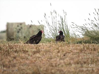 Turkey Vultures Poster by J McCombie