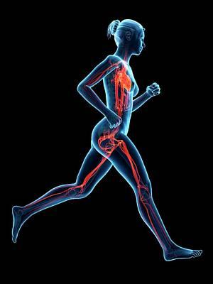 Vascular System Of A Runner Poster