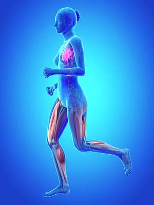 Vascular System Of Runner Poster