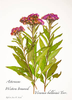 Western Ironweed Poster