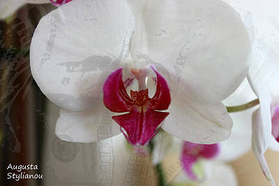 White Orchid Poster by Augusta Stylianou